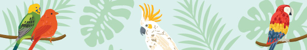top tips on bird care
