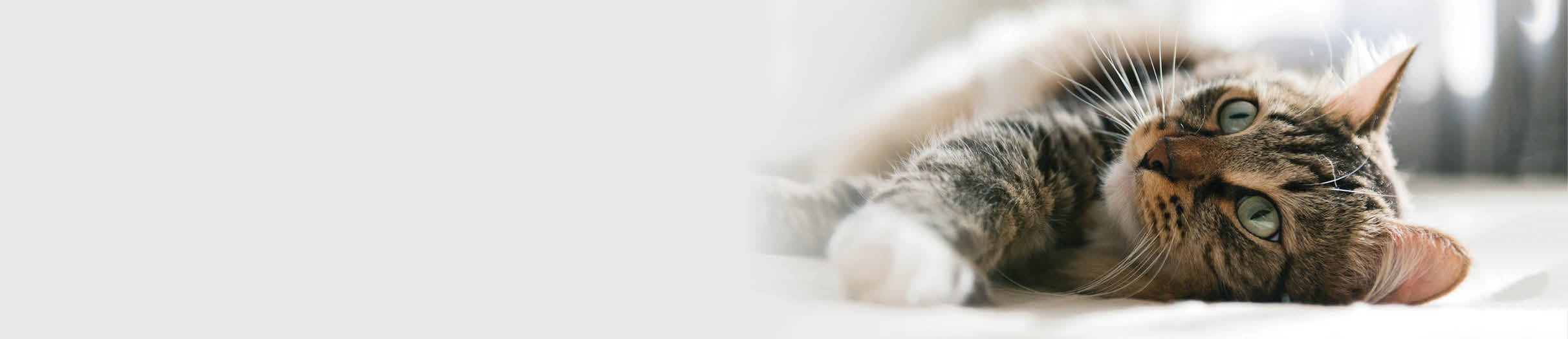 Buy cat food, treatments and products online.
