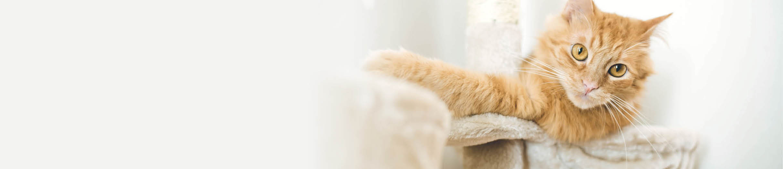 Buy cat furniture scratchers online.