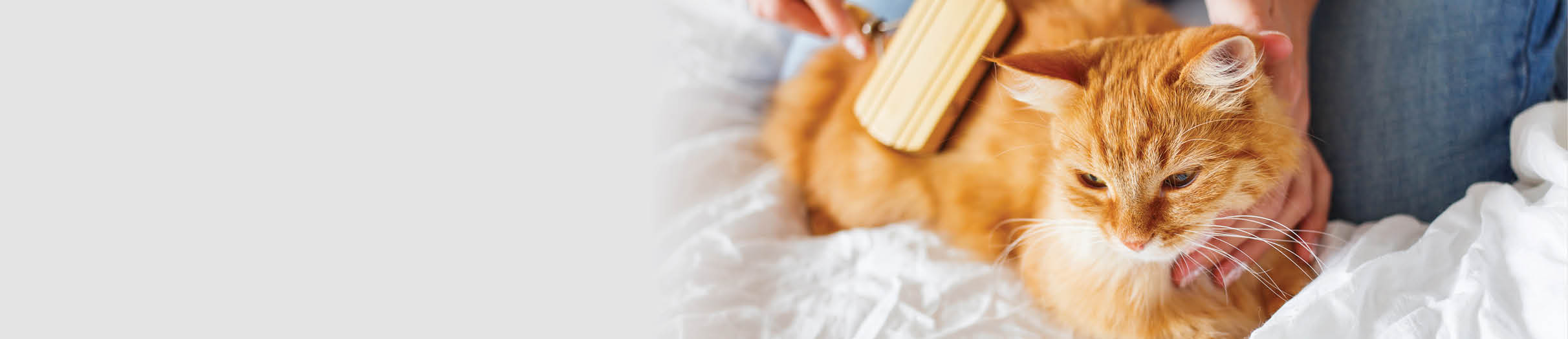 Buy cat grooming products online.