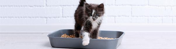 cat hygiene & grooming