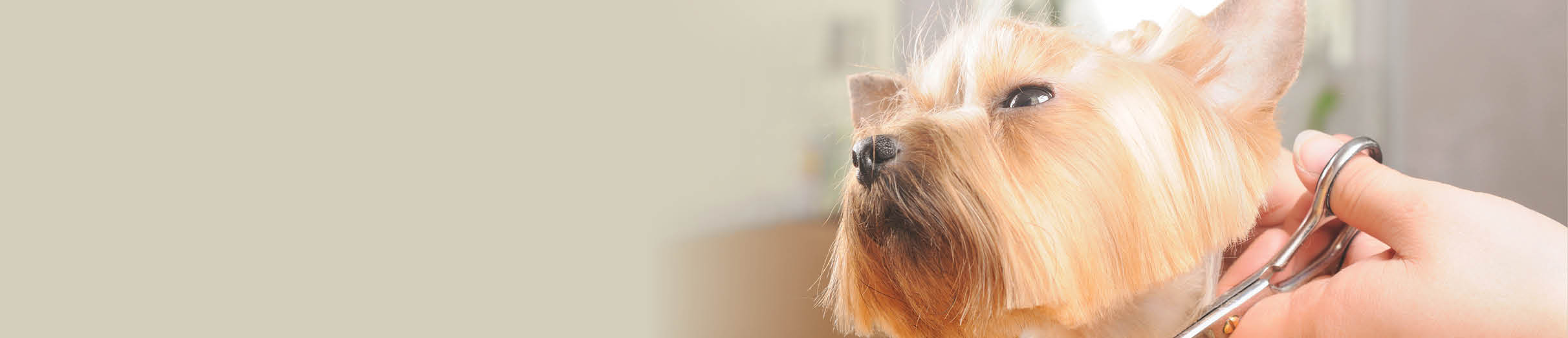 Buy dog grooming products online.